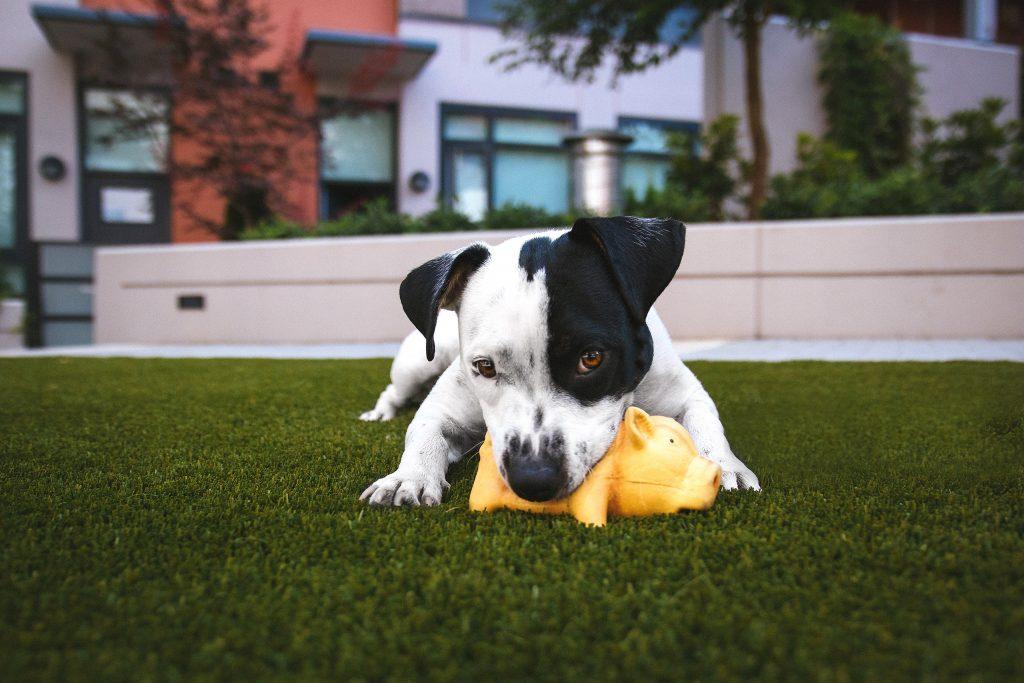 Artificial grass for dogs brisbane redlands logan artificial grass for dogs solutioingenieria Images